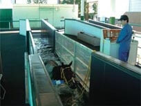 Water treadmill(Walking training using artificial water current)