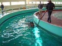 Training in the circular pool