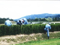 Mending the fences of the steeplechase course