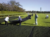 Laying a cheesecloth on the lawn to quicken the growth
